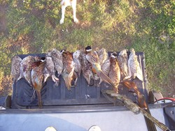 South Dakota Chicken and Sharptail Prospects Look Promising for 2007