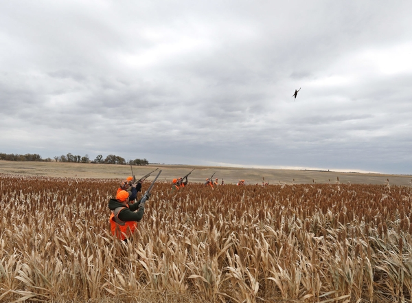 Some Farmers Optimistic About Pheasant Numbers