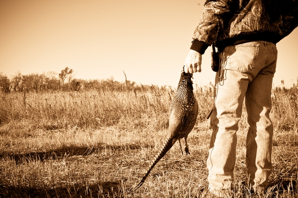 2018 Pheasant Season End Conclusions - Final Report