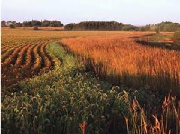 The Case for Pheasants - Solutions