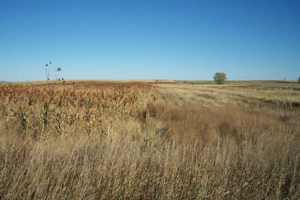 CRP and Pheasants Need Your Help Now