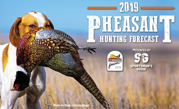Pheasants Forevers South Dakota Pheasant Hunting Forecast 2019