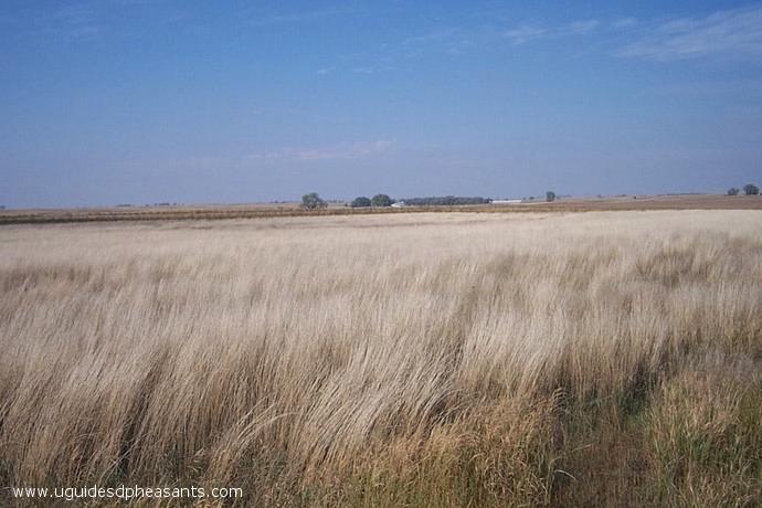 Uguide south dakota pheasant hunting pheasant hunting for South dakota fishing license