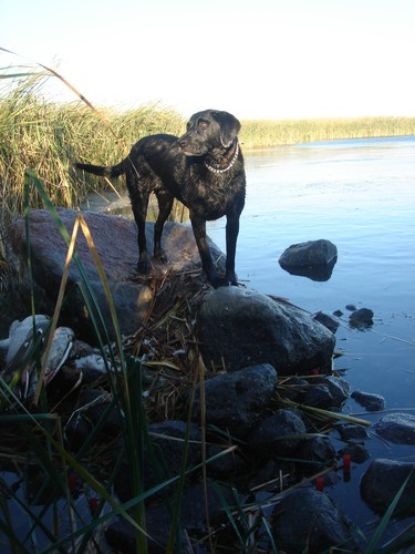 Waterfowl Hunting Photo