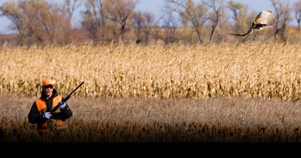 Unguided South Dakota Pheasant Hunting